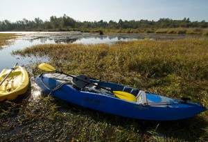 Kayaks are a great way to get around local wetlands to conduct fieldwork. (Photo: Isabelle Groc)